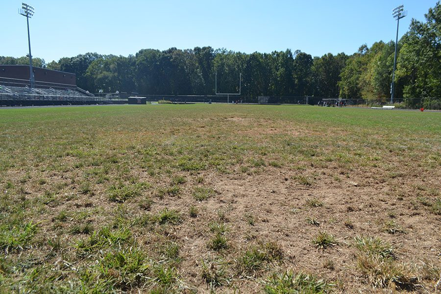 Stadium Grass to be Replaced this Summer