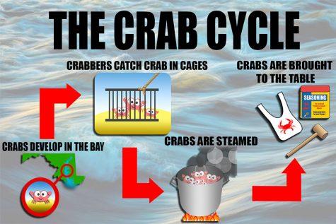 Inside Look: Maryland Blue Crab Season